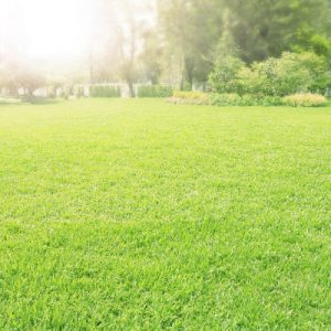 Lawn Aeration Services in Charlotte, North Carolina