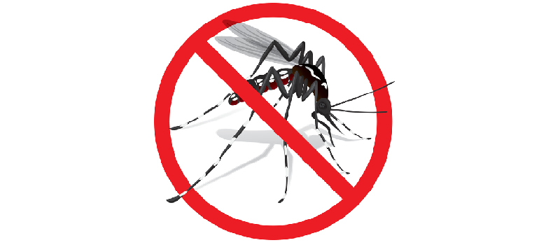 Kill Mosquitos in Charlotte, North Carolina