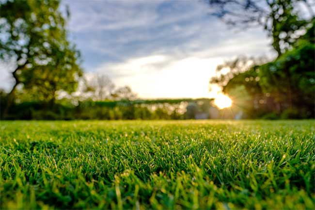Lawn Care Mistakes to Avoid