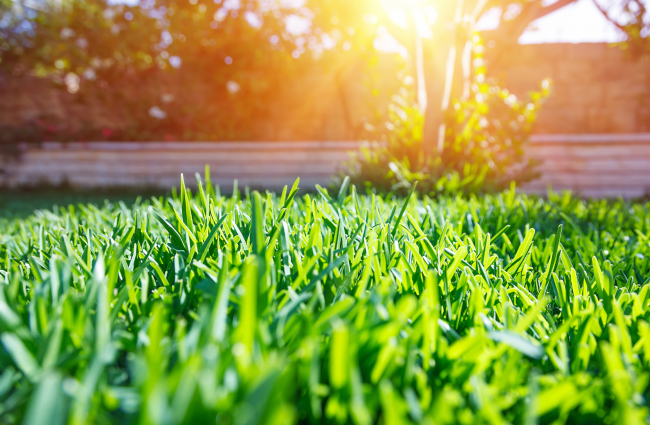 Turf Care Services Will Make Your Lawn Beautiful Again