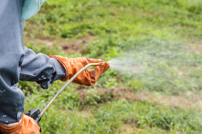 Increase Your Curb Appeal with Lawn Weed Control