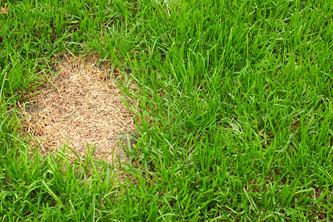 Common Turf Problems and Their Solutions