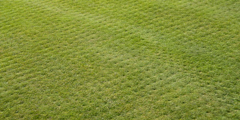 Selecting a company for your turf aeration services