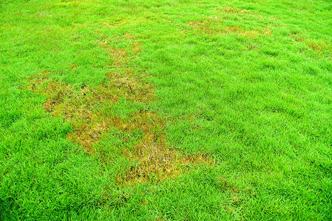 Common Turf Problems and What to Do About Them