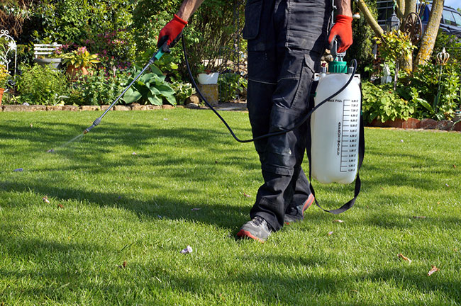 Turf Weed Control Services: What You Need to Know