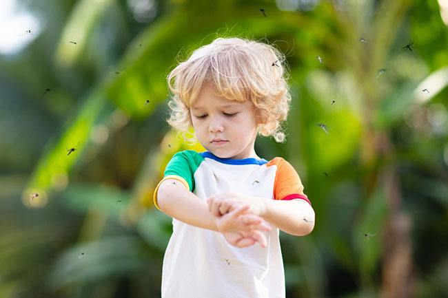 Kid, Pet, and Environment-Friendly Methods of Mosquito Removal