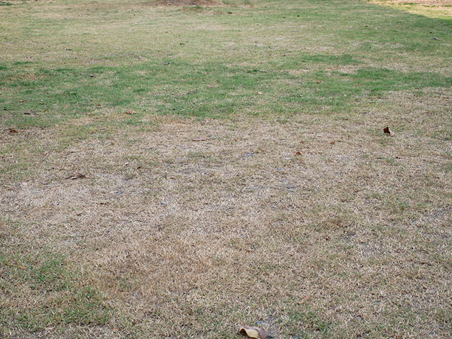 Common Turf Problems to Watch Out For