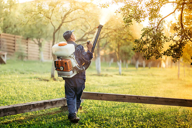 3 Benefits of Professional Mosquito Control Services