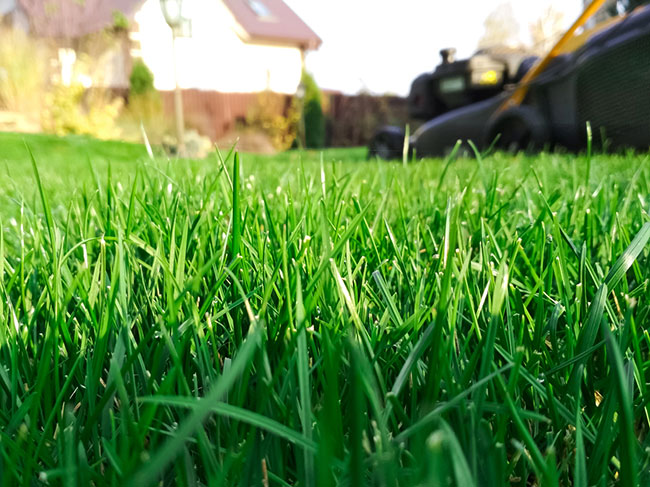Reasons to Leave Lawn Fertilization to the Professionals