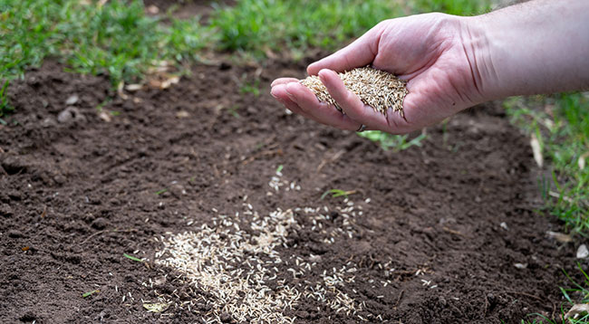 Signs It's Time for Turf Reseeding in Your Lawn